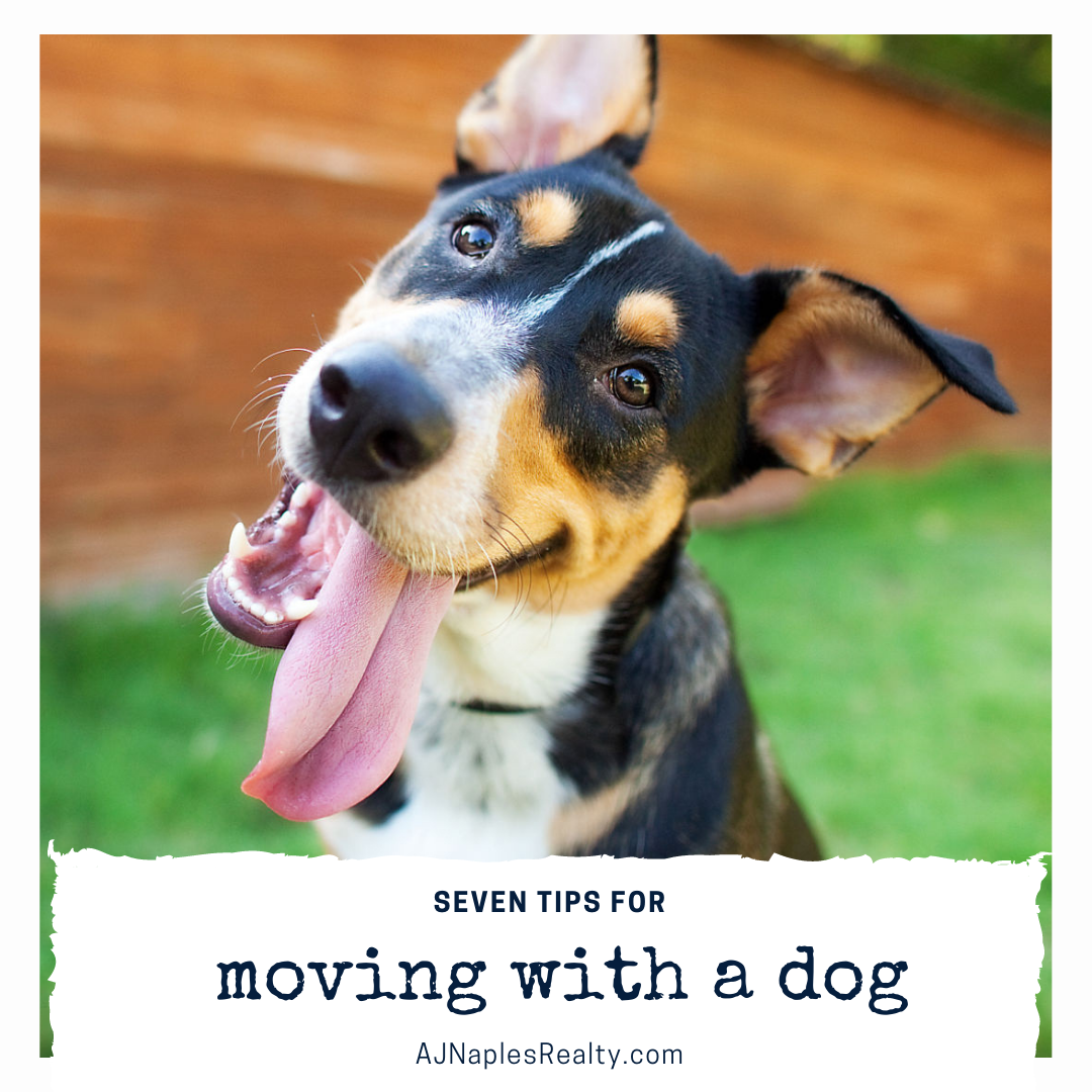 7 Tips for Moving to Naples With a Dog - AJ Naples Realty Luxury Homes